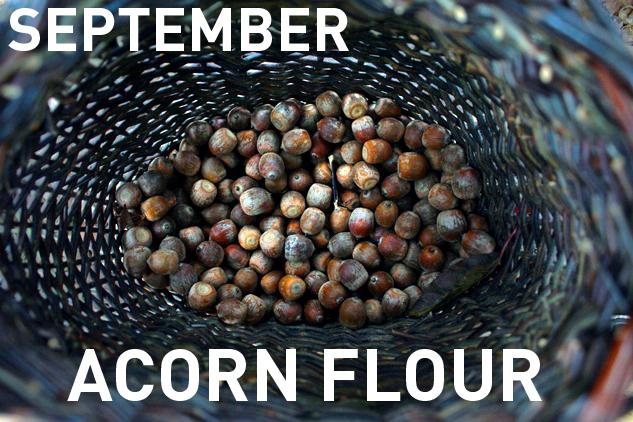 9_Sept_Acorns
