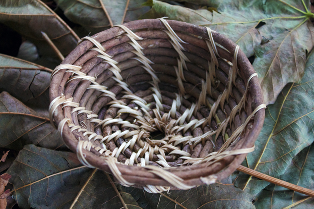 coiled ivy normal